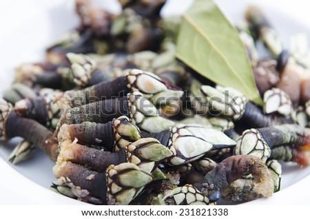 Goose barnacle - stock photo