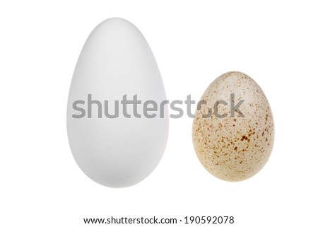 goose egg and a duck egg - stock photo