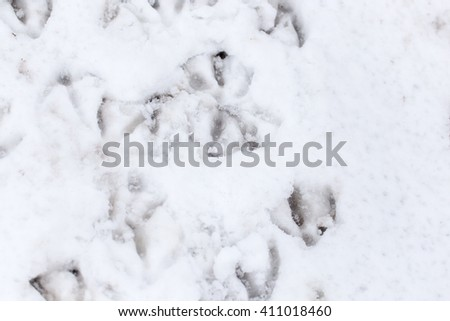 Goose footprints in the snow as a background