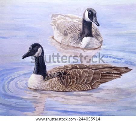 Goose on the water, ducks - stock photo