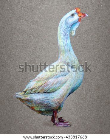 Goose white drawing. Vintage background. Anser. Anser cygnoides. Swan Goose. Colored pencil drawing Goose . Classicdrawing Goose. Detailed drawing Anser. - stock photo