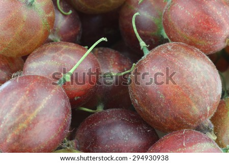 gooseberries (Ribes uva-crispa) background - stock photo