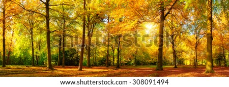 Gorgeous autumn landscape panorama of a scenic forest with lots of warm sunshine - stock photo