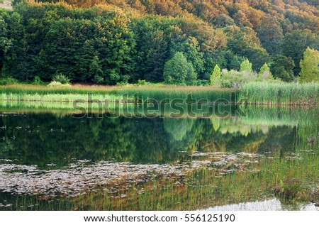 Gorgeous green forest during sping reflected on a small lake.