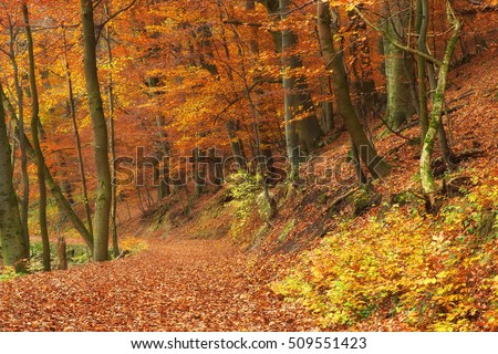 Gorgeous lush autumn forest with wide winding path
