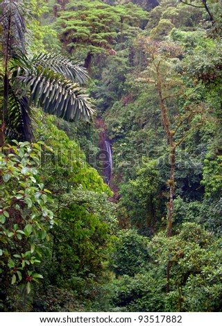 Gorgeous, lush, dense rainforest of Central America with a waterfall in the far distance.