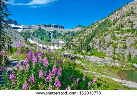 Gorgeous mountain view. Outlook at the valley with the flowers and  Table mountain at the back at Mount Baker lands and wilderness. North America. - stock photo