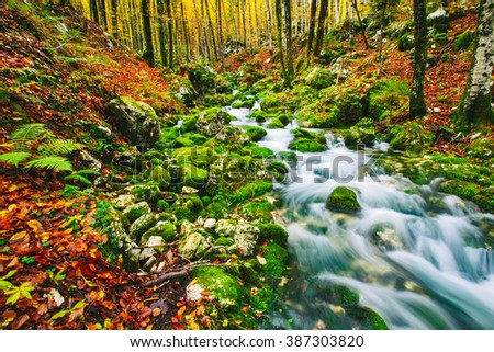 Gorgeous scene of creek in colorful autumnal forest near Bohinj lake Slovenia, Europe. Triglav national park. - stock photo
