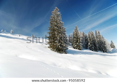 gorgeous winter season with fir trees - stock photo