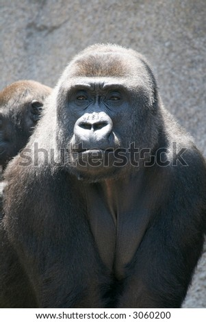 gorilla mother holding her baby