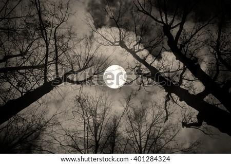 Gothic night landscape in sepia tones - silhouettes of the bare tree branches on the background of the full moon and dramatic cloudy night sky - stock photo
