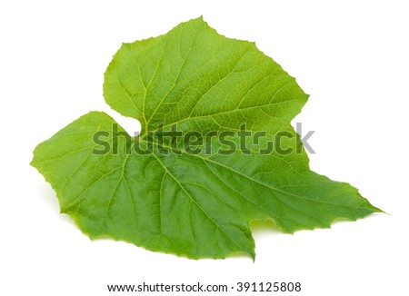 Gourd Leaves Isolated on White Background