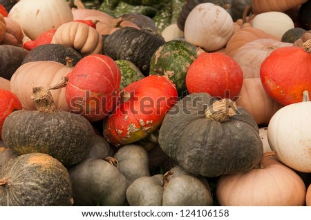 Gourds 3 - stock photo