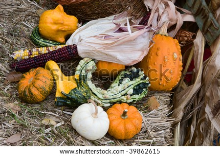 Gourds and Indian Corn during the fall season. - stock photo