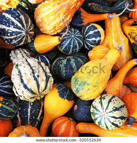 Gourds and squashes of different shapes and colors. - stock photo