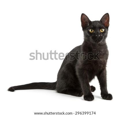 graceful black cat, shot on white background - stock photo