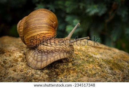 graceful snail on the stone - stock photo