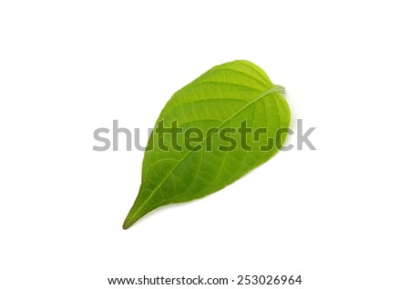Gradient green leave isolate on white background - stock photo