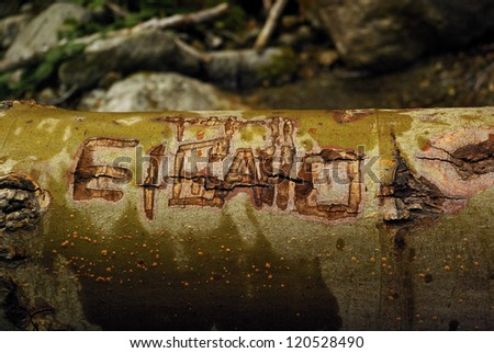Graffiti Named Scratched into Fallen Tree in Forest - stock photo