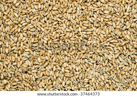 grain as good natural background