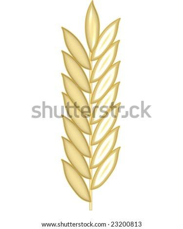 grain cereal crop - stock photo