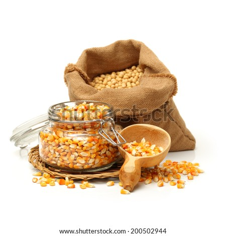 grain corn and soybean on white background  - stock photo