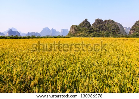 Grain field in a beautiful landscape on asunny day - stock photo