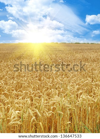 Grain field under beautiful sky with sun