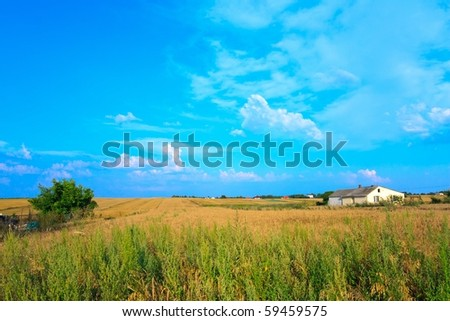 Grain fields under blue sky in polish village. - stock photo