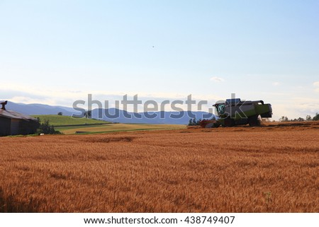 Grain harvesting on the end of summer