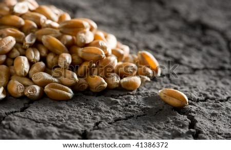 grain heap on wasteland background - stock photo