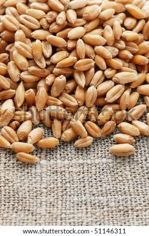 Grain of the wheat on a hessian - stock photo