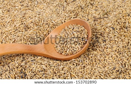 Grains of barley background - stock photo