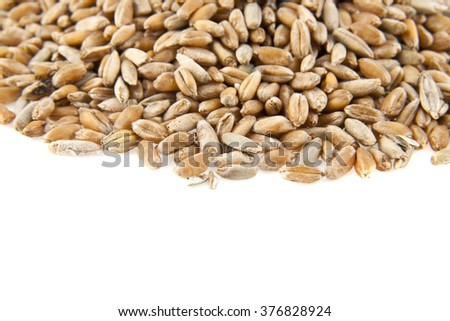 grains of pshenici are isolated on a white background - stock photo
