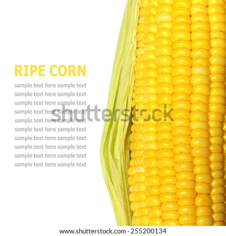 Grains of ripe corn isolated on a white background  - stock photo