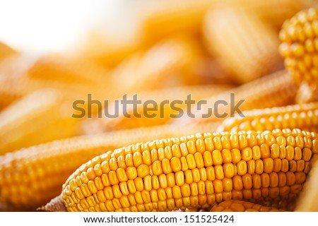 Grains of ripe corn. Macro image.  - stock photo