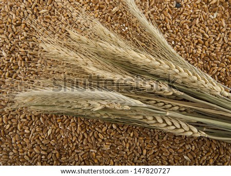 grains of wheat as background
