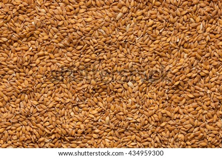 Grains of wheat in closeup view perfect agriculture texture image - stock photo