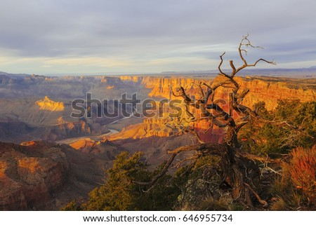 Grand Canyon at the sunset with colorful cliffs and dead tree, Colorado river, Arizona, USA