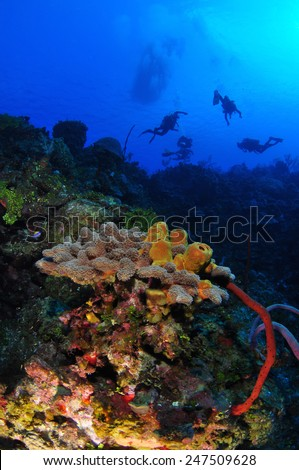 Grand Cayman Reef Scape, Grand Cayman - stock photo