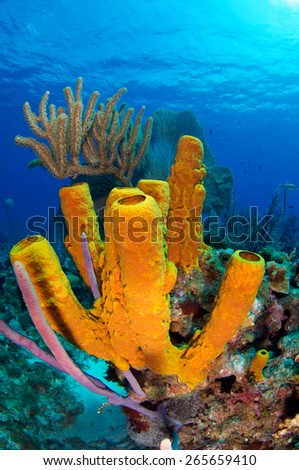 Grand Cayman's coral reef - stock photo