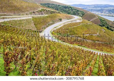 grand cru vineyard of Cote Rotie, Rhone-Alpes, France - stock photo