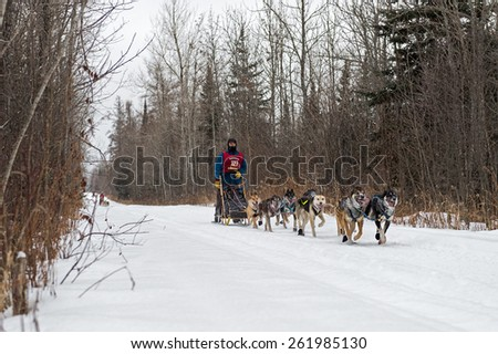 GRAND MARAIS MN - JANUARY 26: Tim Chishom's team races along the trail during the Mid-distance portion of the John Beargrease Sled Dog Race. Bergen finished 20th on January 25, 2015 in Grand Marais MN - stock photo