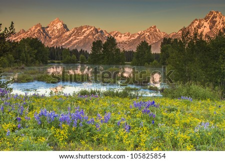 Grand Teton Peaks with field of flowers - stock photo