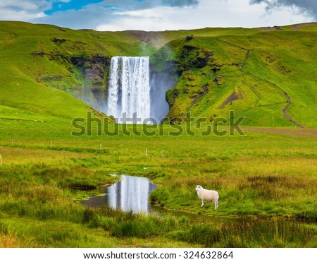 Grandiose falls Skogafoss in Iceland. On a meadow before falls the white lamb is grazed - stock photo