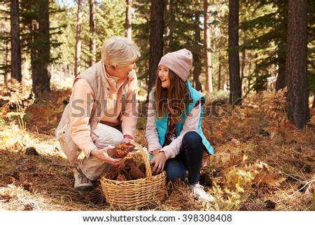 Grandmother and granddaughter collect pine cones in forest - stock photo