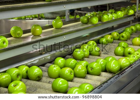 Granny Smith Apples on a sorting table in a fruit packing warehouse - stock photo