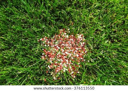 Granular lawn fertilizer on the fresh lawn in the autumn garden - stock photo