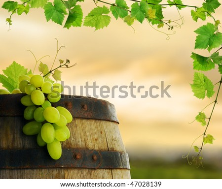 Grape and barrel with fresh grapevine border on background of sunset vineyard