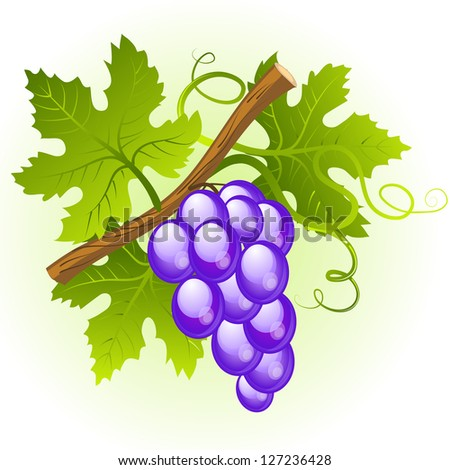 Grape cluster with green leaves. Raster version. Vector is also available in my gallery - stock photo
